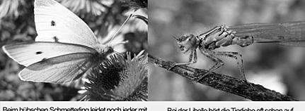 Schmetterling und Libelle